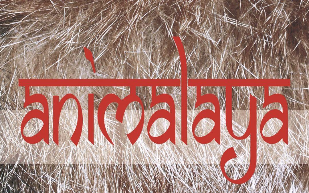 Exposición Temporal: Animalaya